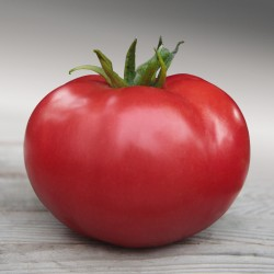 Pomidor szklarnia/tunel MALINOWY ZERSY F1