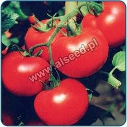 Pomidor szklarniowy PARICA F1 LSL